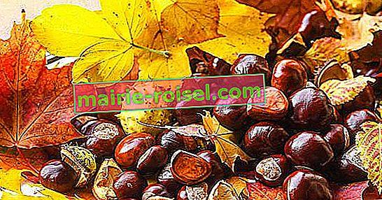 Châtaignes, noix et amandes: tout ce que vous devez savoir sur les oléagineux