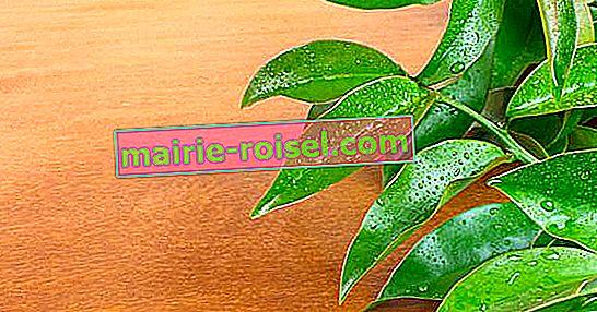 Waar is de ora-pro-nobis-plant voor? 5 voordelen van deze groente